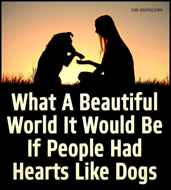 A dogs heart